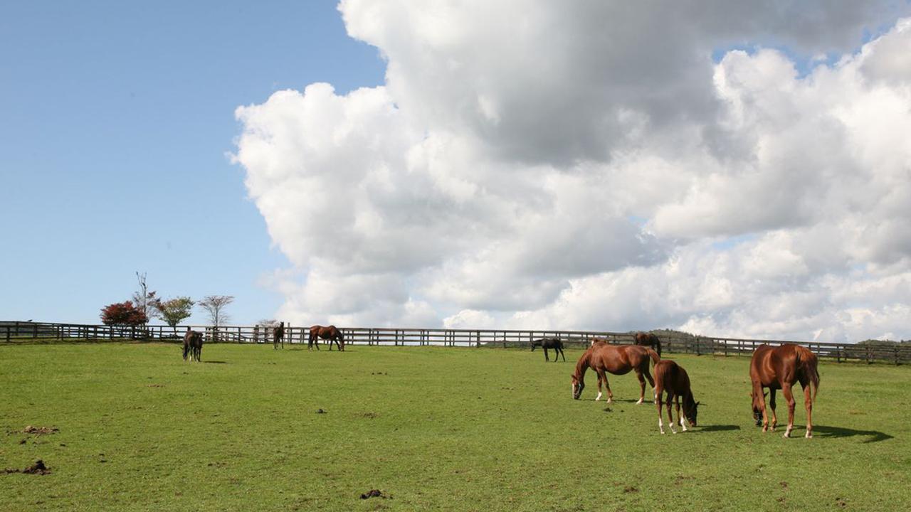 池江流 最強の馬体の見方