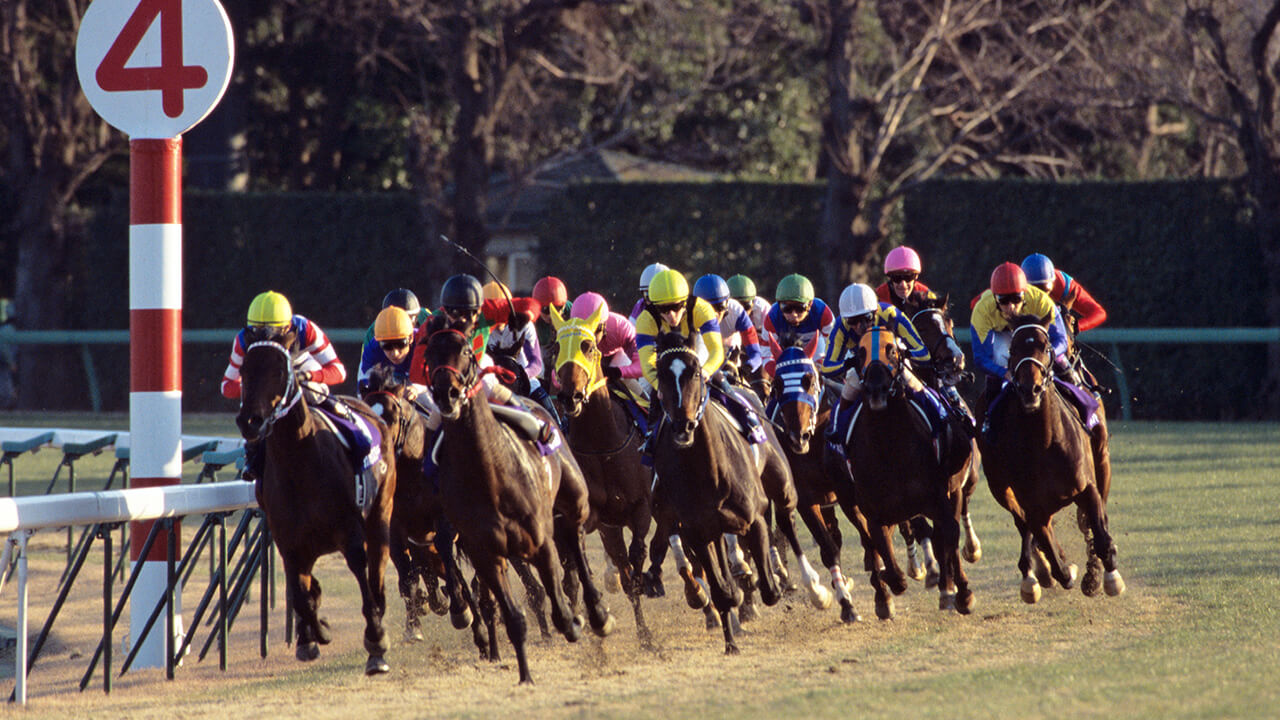 夏競馬での活躍が目立ち、良馬場でこそ持ち味を発揮
