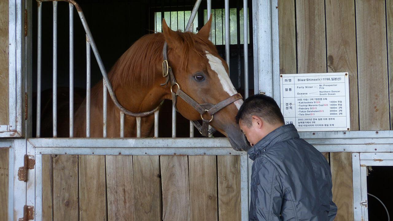 地味な血統の華奢な馬