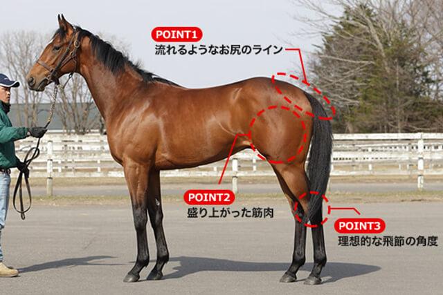 最強の馬体の見方