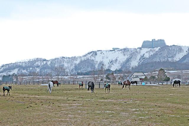 メジロ牧場