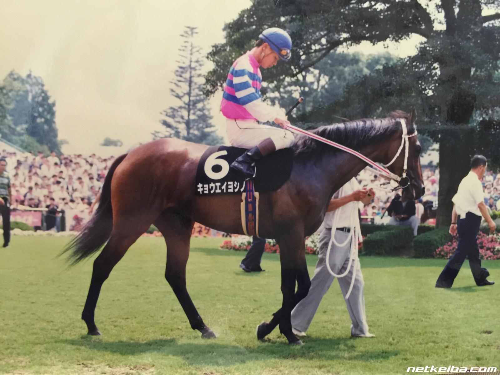 キョウエイヨシノ | 競走馬データ - netkeiba.com