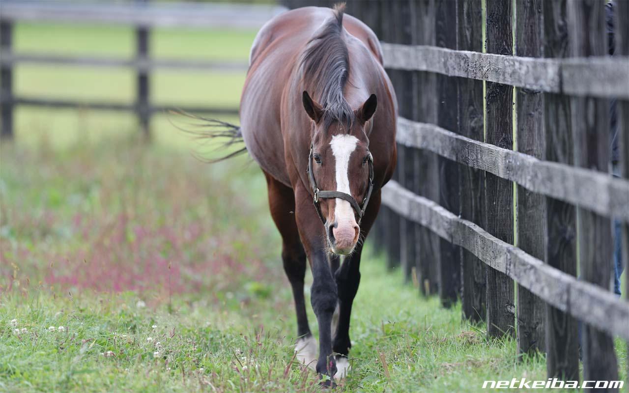 メイショウドトウ | 競走馬データ - netkeiba.com