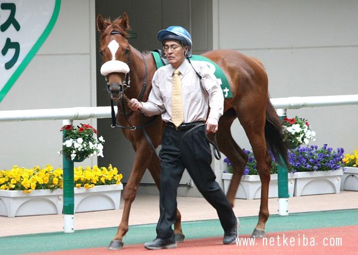 マイネカンナ | 競走馬データ - netkeiba.com