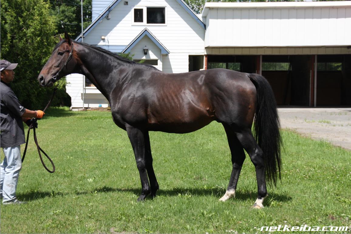 オネストジョンの血統表 | 競走馬データ - netkeiba.com