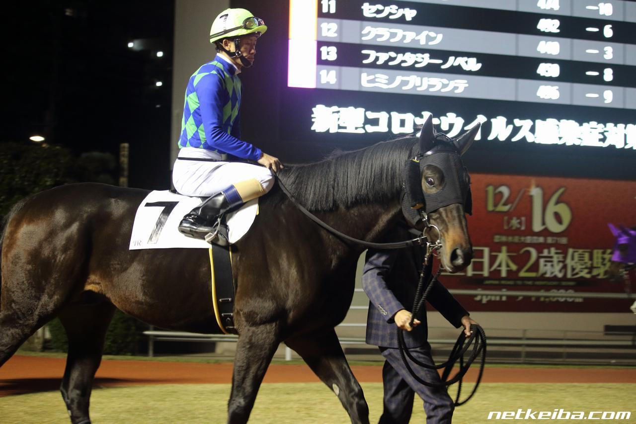 ウインゴライアス   競走馬データ - netkeiba.com