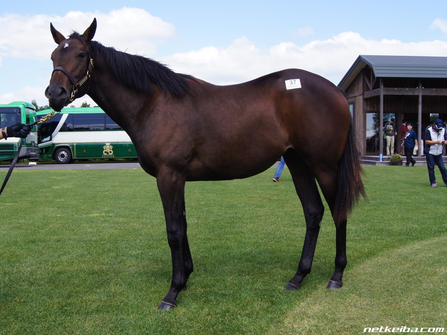 ラティーンセイル   競走馬データ - netkeiba.com