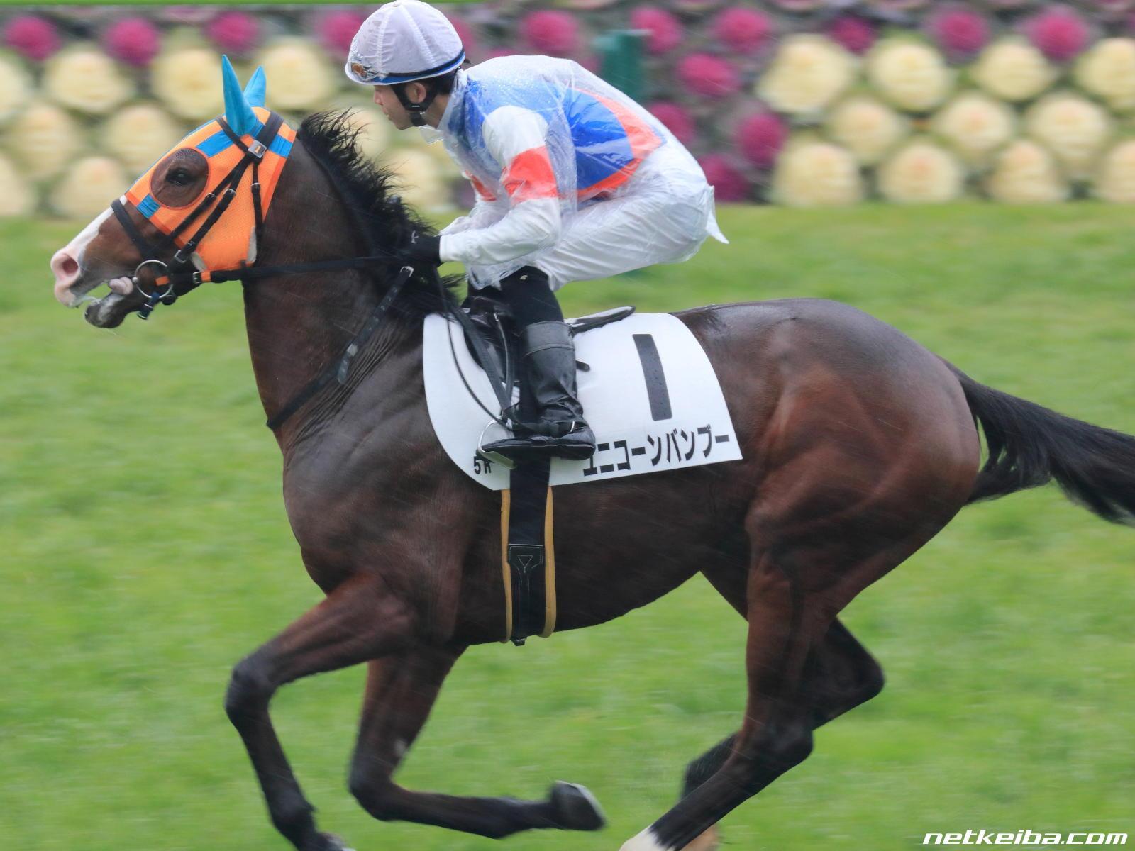 ユニコーンバンブー   競走馬データ - netkeiba.com