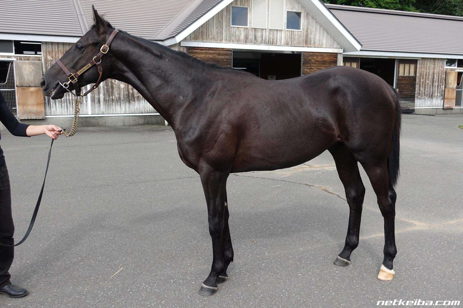 エイスオーシャンの血統表 | 競走馬データ - netkeiba.com