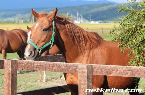 イクノディクタス | 競走馬データ - netkeiba.com