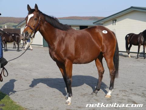 キストゥヘヴン | 競走馬データ - netkeiba.com