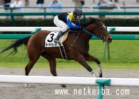 ウィキウィキ | 競走馬データ - netkeiba.com