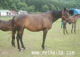 アルコセニョーラ | 競走馬データ - netkeiba.com