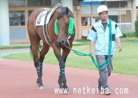 キャプテンクック   競走馬データ - netkeiba.com
