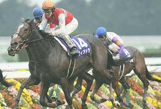 ディアドラ他馬の画像