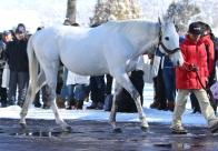 種牡馬展示会・前篇 今年は社台スタリオンからのスタート