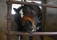 一大決心 レンタルホースが愛馬に… 女性オーナーがもたらしたトウケイゴールドの馬生(2)