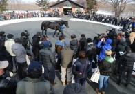 今年も賑わいをみせた社台スタリオン種牡馬展示会
