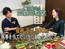 """阪神芝1800mで""""儲かる血統""""とは? 亀谷敬正の動画番組「血統の教室」"""