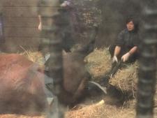 「今日もどこかで馬は生まれる」(3) 命と向き合う現場の葛藤—1頭でも多くの馬を救うために