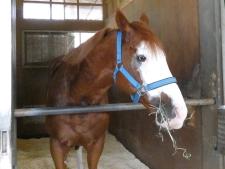 """可愛くて強くて優しい""""白面""""の馬、メイクアップのありし日の姿"""