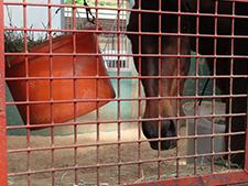 93年皐月賞馬ナリタタイシンのいま(3)「目指せ!」GI馬の最長寿