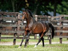 【追悼ディープインパクト】牧場担当者が明かす種牡馬ディープの素顔