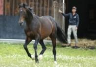 【追悼ディープインパクト】写真で振り返る種牡馬時代(無料公開)