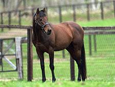 【追悼キングカメハメハ】写真で振り返る種牡馬時代(無料公開)