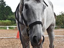 余生の保証ない競走馬の命をつなげるため—馬に携わる人に必要なものは