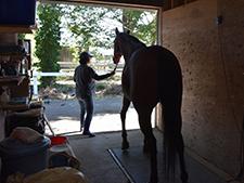 やっと見つけた馬は畜産業者に—筆者の実体験からみる、馬を引き取るということ