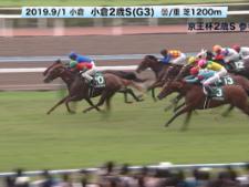 【京王杯2歳S 2019】参考レース