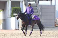 【有馬記念】「有馬に強い菊花賞馬」武豊騎手も笑顔、ワールドプレミアの手応え
