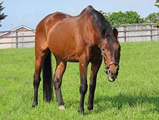 93年皐月賞馬ナリタタイシンのいま(1)29歳を迎えた世代屈指の切れ者