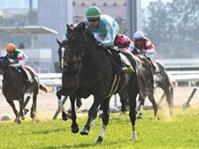 始まりはアラブ馬生産 デアリングタクトを送り出した長谷川牧場の挑戦