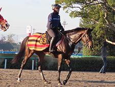 【東スポ杯2歳S】木村厩舎期待の1頭! 王者の血を引くドゥラヴェルデ