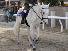 GI誘導馬が園田にやってきた!きっかけはマコーリー