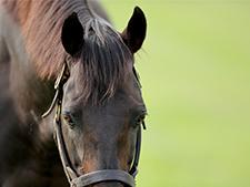 意外と知らない!? クロノジェネシスの父、バゴって一体どんな馬?