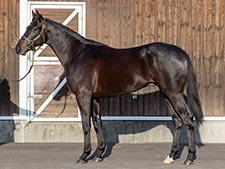 【POG2021-2022】赤本のおすすめ10頭で取りたかった馬とドラフト下位で面白い馬(須田鷹雄)