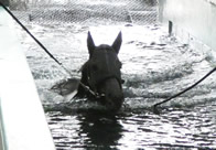 【夏休み! 馬だってプールに砂場にふかふかベッドで満喫(1)】全く泳げない馬は存在しない、競走馬スイミングプールに潜入!