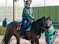 【東スポ杯2歳S】ルヴォルグ新たなスター候補へ 2歳馬絶好調の藤沢和厩舎期待馬