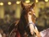 【地方競馬】東京ダービー馬インサイドザパークが引退 林正人師「いい夢を見せてくれてありがとうございました」