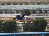 メイショウテッコン、日経新春杯最終追い切り速報/栗東トレセンニュース