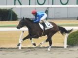 【京都4R新馬戦】外国産馬ララクリュサオルが大差勝ち/JRAレース結果
