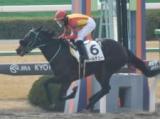 【京都2R新馬戦】ブルーメンブラットの仔パールデューが初陣飾る/JRAレース結果