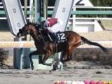 【黒竹賞】デアフルーグが断然人気に応え5馬身差V/JRAレース結果