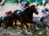 【根岸S】サンライズノヴァは戸崎圭太騎手、コパノキッキングはマーフィー騎手/JRA重賞想定騎手