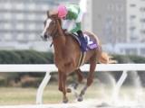 【名古屋・若草賞】地元のゴールドリングが7馬身差V/地方競馬レース結果