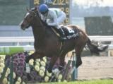 【京都新聞杯】登録馬 ナイママ、ロジャーバローズなど16頭