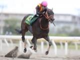 【船橋・かしわ記念】ゴールドドリームが2強対決を制して連覇達成!/地方競馬レース結果